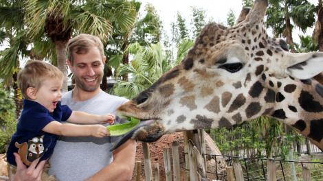 在劳瑞公园动物园喂长颈鹿