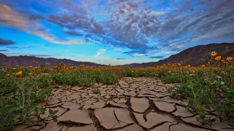南加利福尼亚州安沙波列哥沙漠州立公园内迎着朝阳绽放的绚烂野花