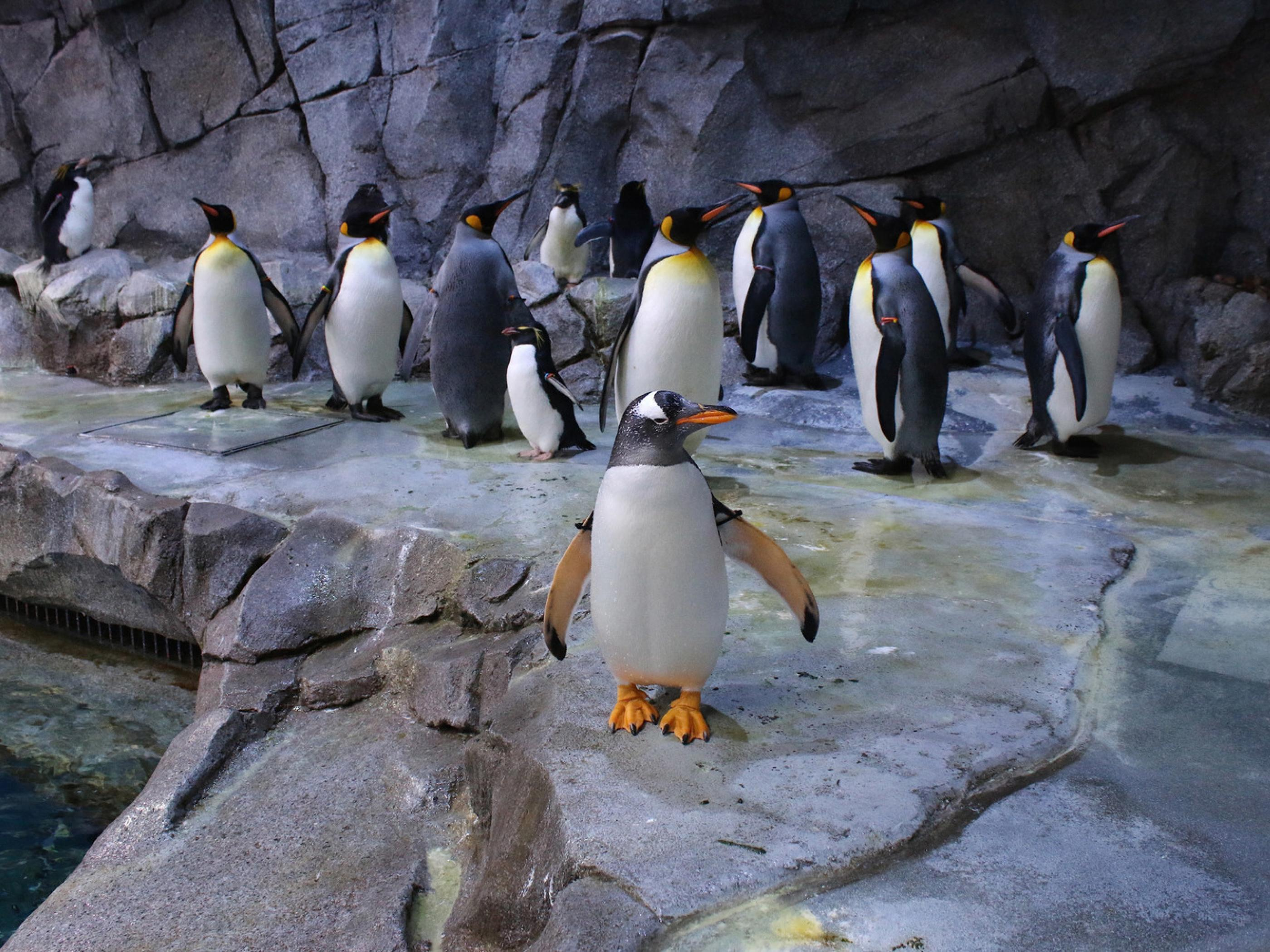 底特律动物园的企鹅