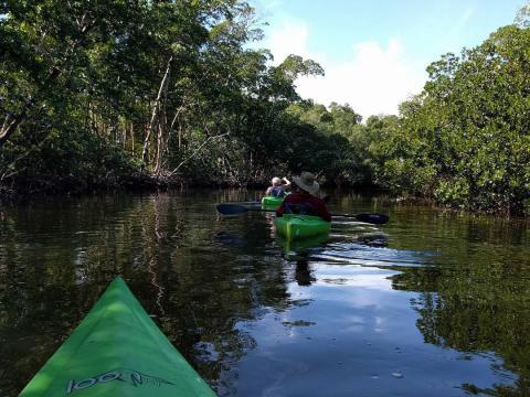"""在佛罗里达州萨尼贝尔岛的""""丁""""达林国家野生动物保护区划皮艇"""
